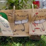 Gatti che si asciugano