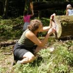 Contando gli anni degli alberi