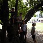 Un albero accogliente